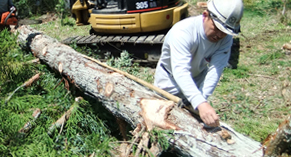 堀江工務店の家づくりは、無垢材と自然素材の人にと環境にやさしい家づくりです。